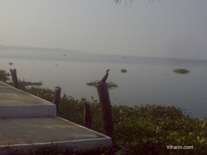 View of Vembanad Lake from stairs of Cocobay resort