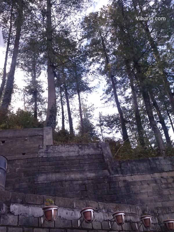 Viharin.com- tree view from Royal Himalaysn Club, Shimla