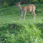 Viharin.com- Deer looking around