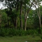 Viharin.com- Forest
