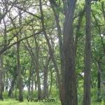 Viharin.com- Jungle
