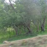 Viharin.com- Lush green forest