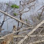 Viharin.com- Monkeys enjoying