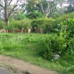 Viharin.com- herd of deers from far