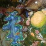 Viharin.com- Blue coloured coral