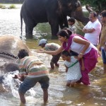 Viharin.com- Elephant Camp in Kushalnagar