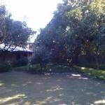 Viharin.com- Greenery at Tiger Camp resort