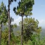 Viharin.com- Scenic view