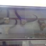 Viharin.com- Display at Tribal Museum