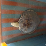 Viharin.com- Turtle in the museum