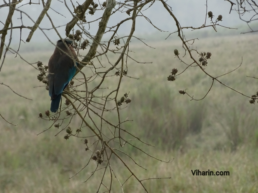 Viharin.com- Beautiful bird