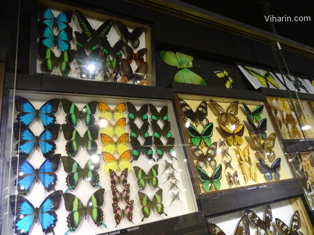 Viharin.com- Beautiful butterflies