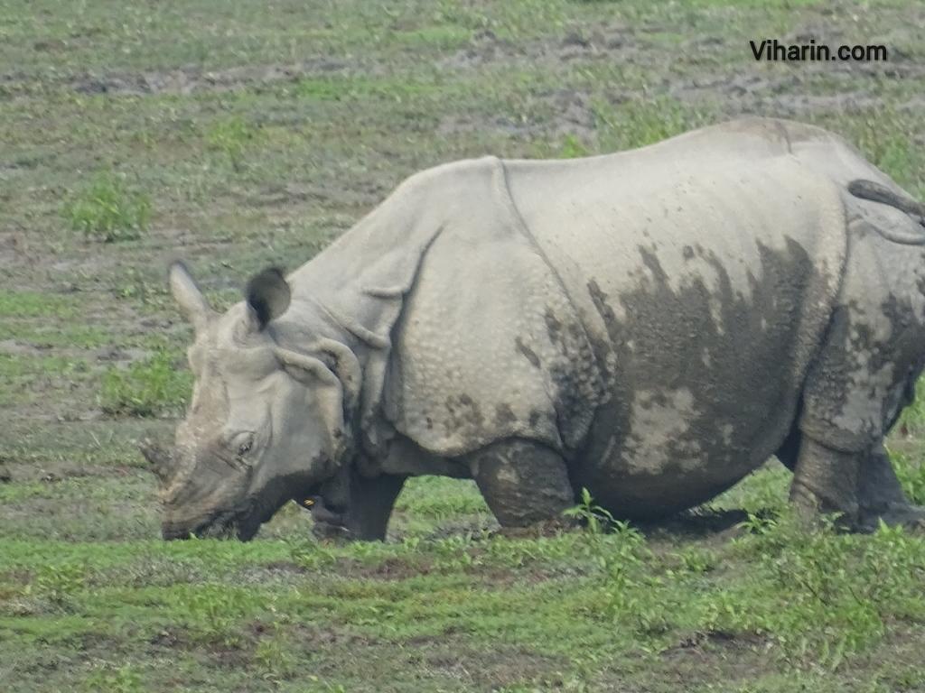 Viharin.com- Close up of Rhino