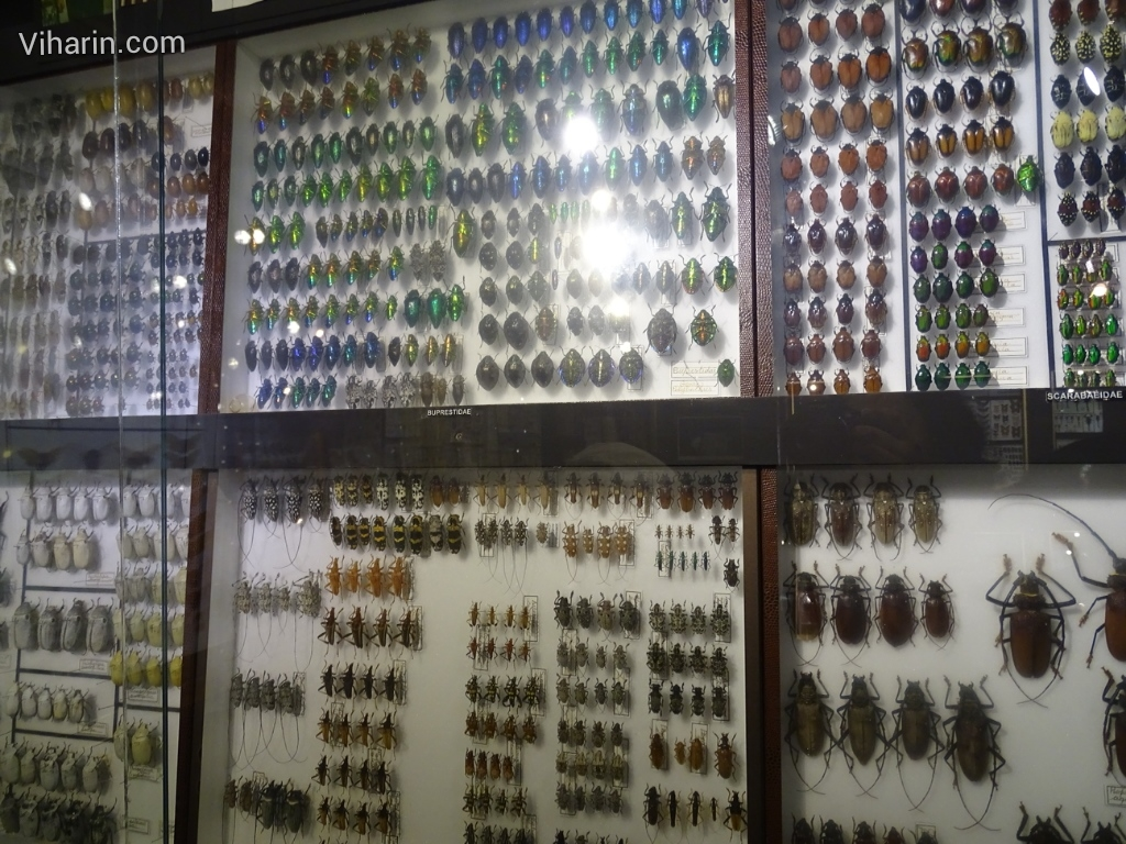 Viharin.com- Different kinds of insects