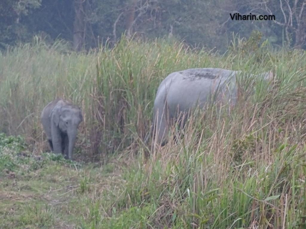 Viharin.com- Family of elephants