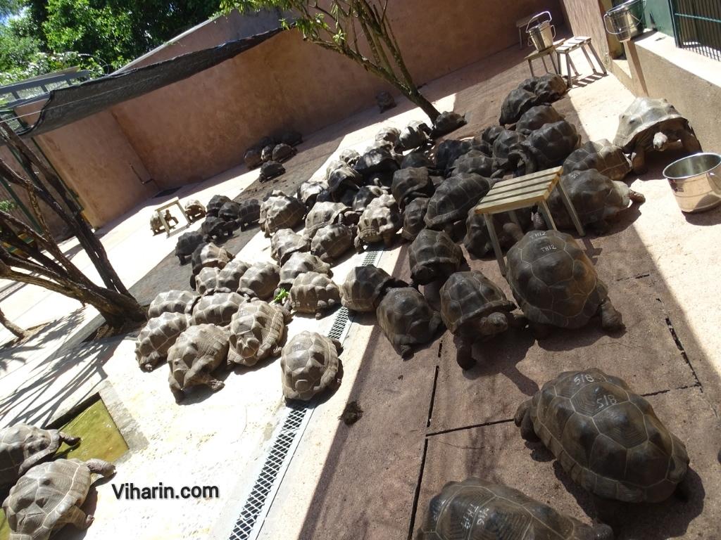 Viharin.com- Tortoise busy eating