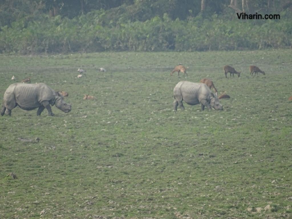 Viharin.com- Two Rhinos