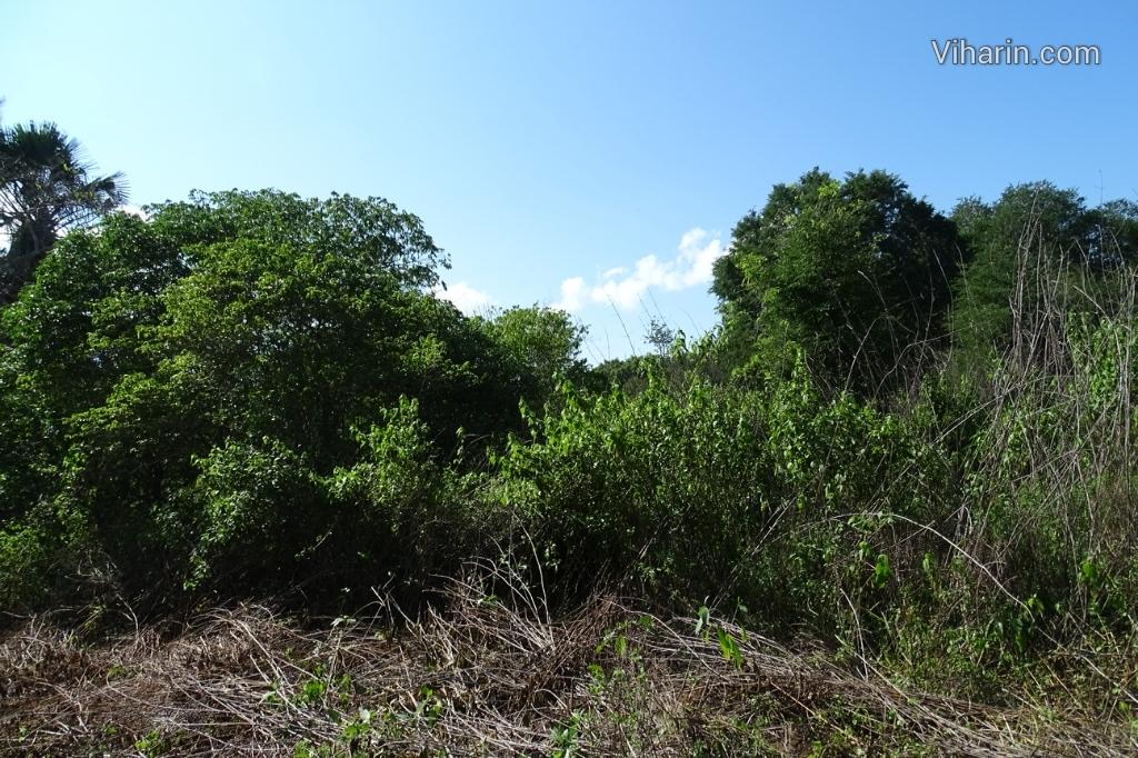 Viharin.com- Dense forest