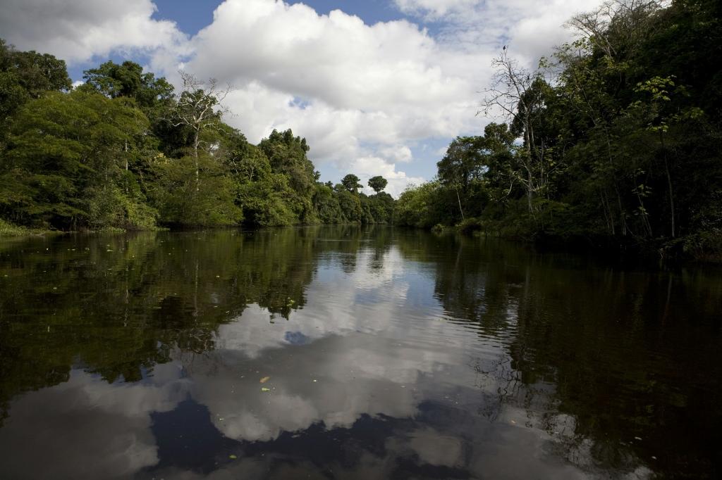Amazon rainforest deals