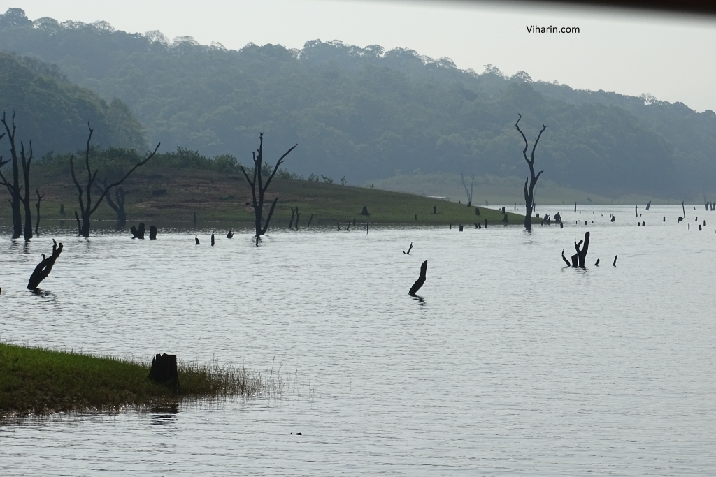 Beauty of Periyar National Park