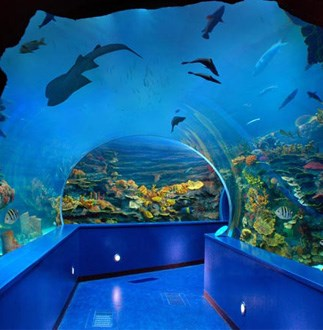 Sharjah aquarium, one of the things to do in Sharjah